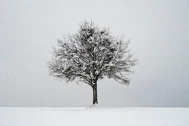 Sen zimowy