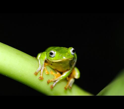 Kto ugotował tę żabę?